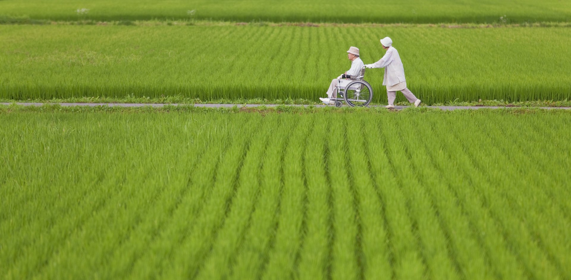 Senior Couple Amidst Green Rice Fields in Japan's Yamagata Prefecture
